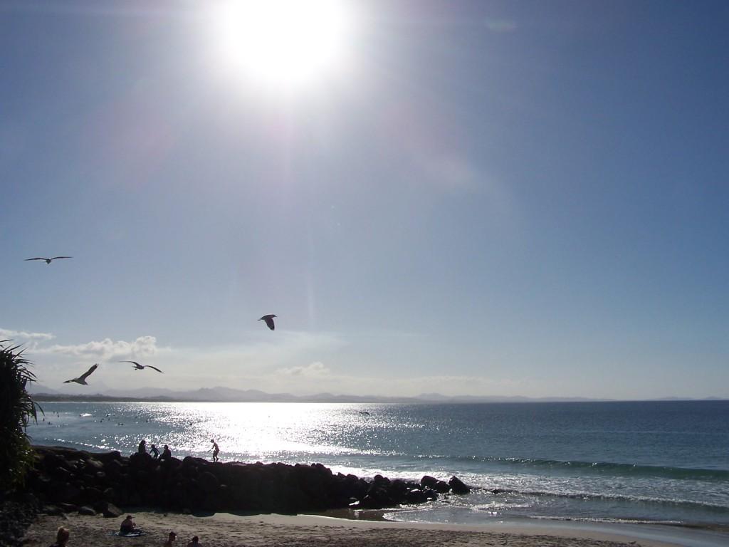 Seagulls at 5PM Byron Bay, NSW: f/5.6; 1/1500sec