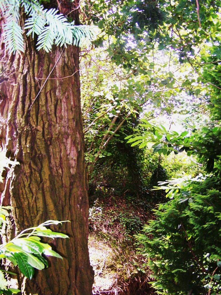 Malvern Woods, Worcestershire England: f/2.8; Exposure 1/60sec