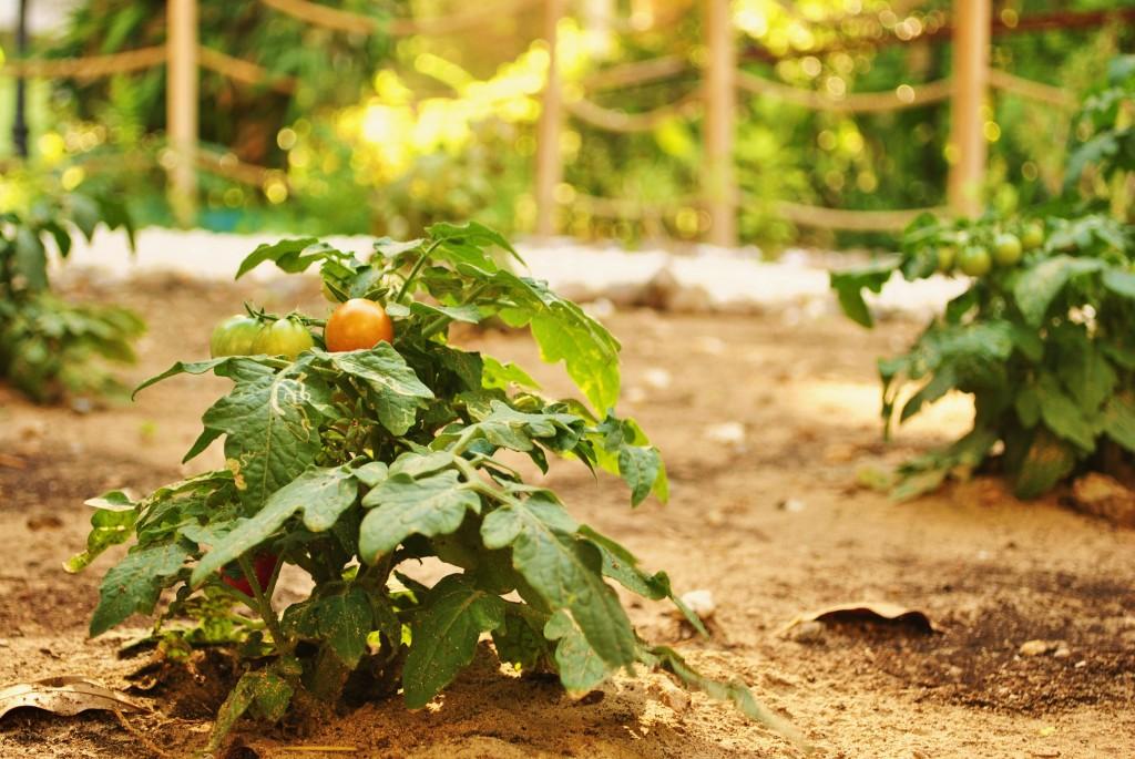 Organic Garden @ Le Bistrot's Sustainable Cuisine: /5.3; 1/20sec; ISO-100
