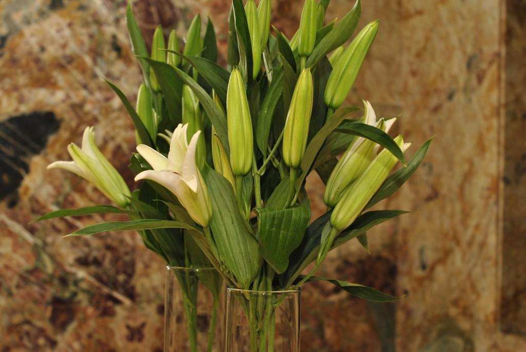 Bice, Hilton Floral Arrangements: f/5; 1/60sec; ISO-400