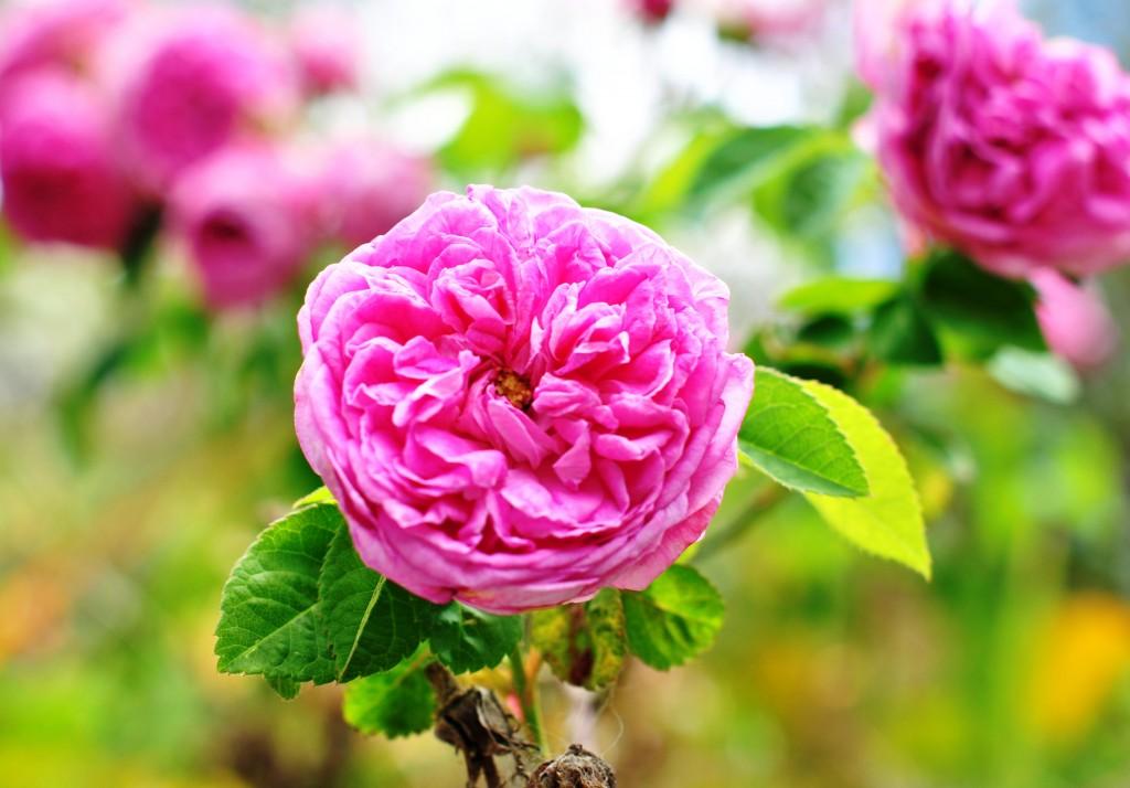 Blooms in Vincentia: f/4; 1/250ec; ISO-100