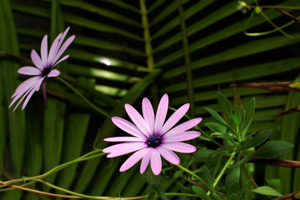 Blooms in Vincentia: f/16; 1/60ec; ISO-140
