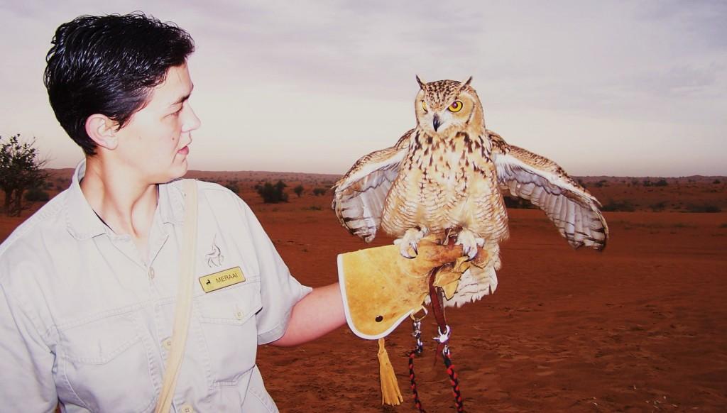 Al Maha Owl and Falcon Talk at desert dawn: f/2.8; Exposure 1/60sec