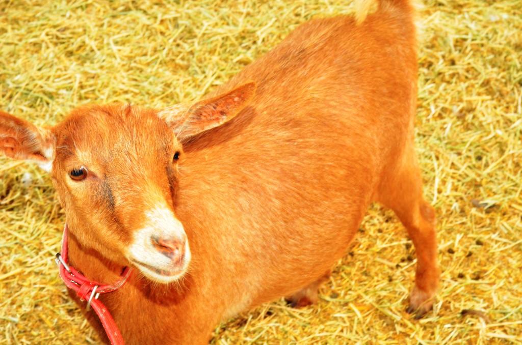 Posh Paws Animal Sanctuary Dubai
